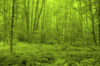 Économie verte, chimie verte, croissance verte... Jusqu'où ira-t-on?