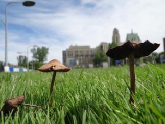 Atelier sur la culture de champignons