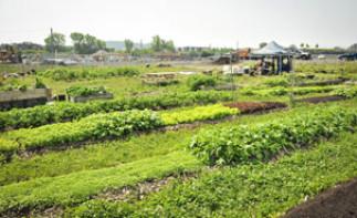 Agriculture urbaine à l'UdeM: Session d'information