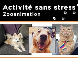 Activité sans stress : venez câliner chiens et chats à la Bibliothèque de santé