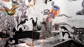 L'art mystérieux des « cabinets de curiosité » (XVI ième - XX ième siècles)