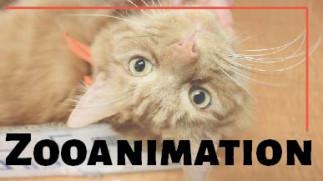 Zooanimation à la Bibliothèque de mathématiques et informatique