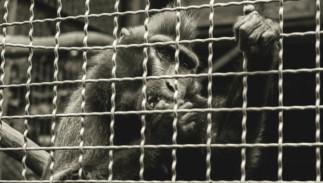 Droits des animaux : du devoir d'éviter la souffrance non nécessaire, à l'égalité animale - ANNULÉ