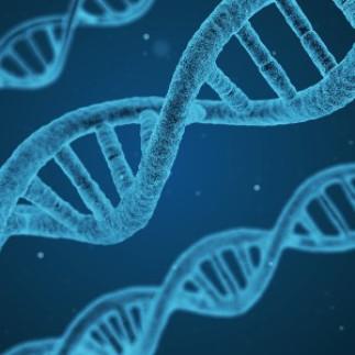 L'ADN : notre disque dur biologique