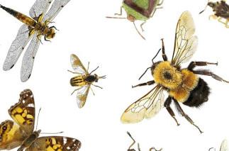 Les insectes du Québec : une majorité incomprise